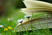 book_on_grass