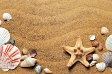 beach_and_shells